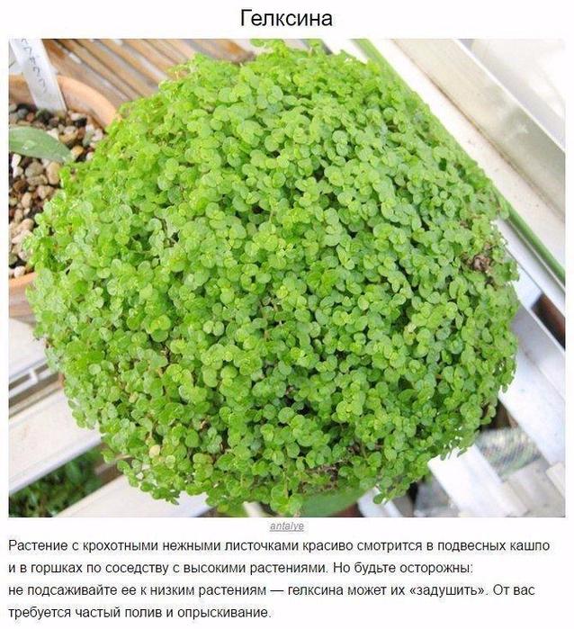 9 домашних растений для темных углов (638x700, 525Kb)