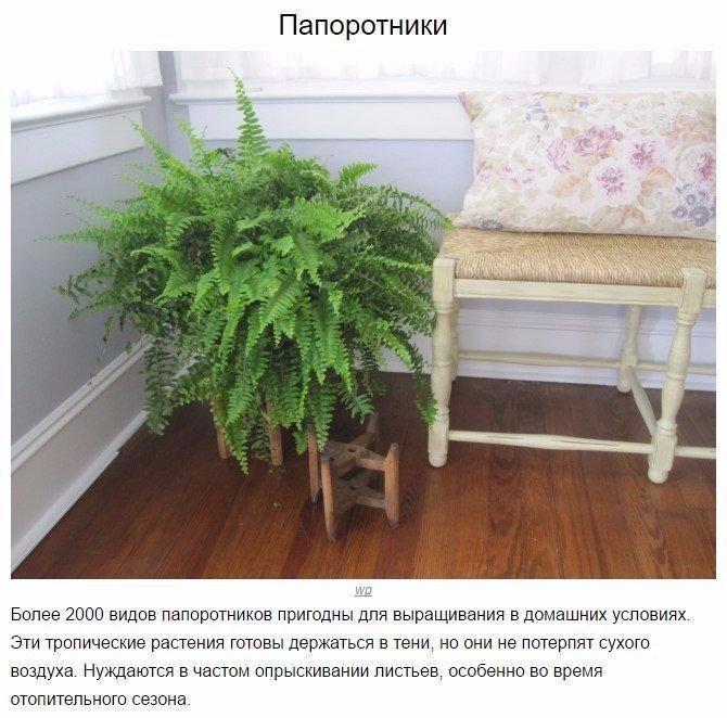 9 домашних растений для темных углов4 (670x662, 348Kb)