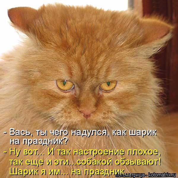 kotomatritsa_O0 (600x600, 339Kb)