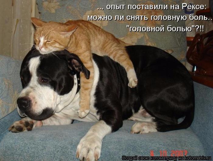 kotomatritsa_p3 (700x529, 354Kb)