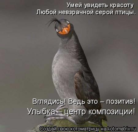kotomatritsa_pY (450x430, 97Kb)