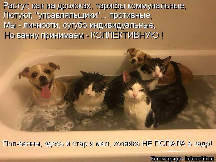 kotomatritsa_t- (700x525, 319Kb)