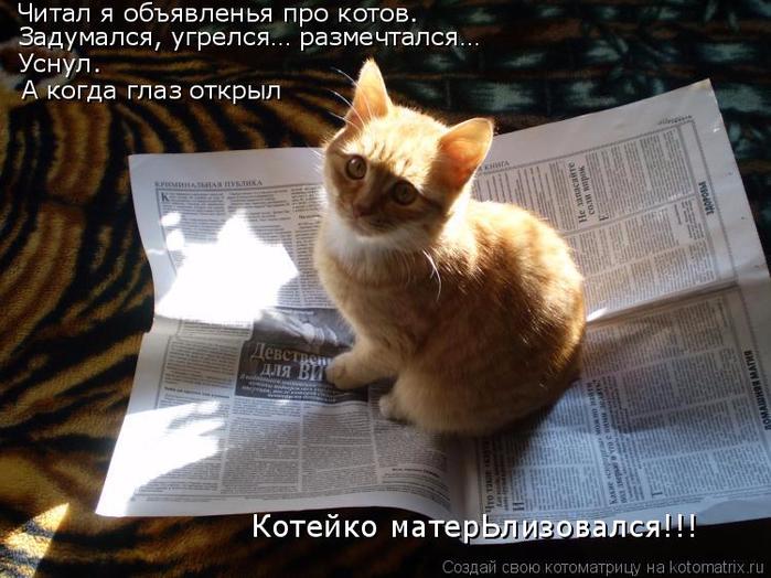 kotomatritsa_Z1 (700x524, 381Kb)
