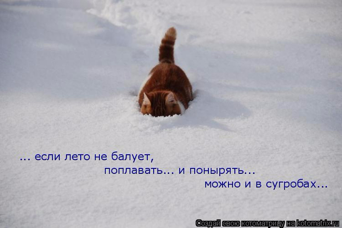 kotomatritsa_ZN (700x467, 188Kb)