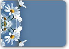 Tatiana-5Нежные-ромашки-пр (230x165, 35Kb)