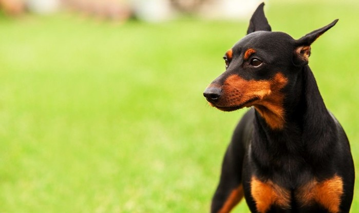 Откуда пошли названия пород собак?