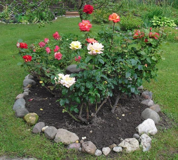 Роза (700x629, 236Kb)