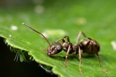 ant-400x266 (400x266, 82Kb)
