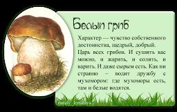 Белый гриб! (256x162, 61Kb)