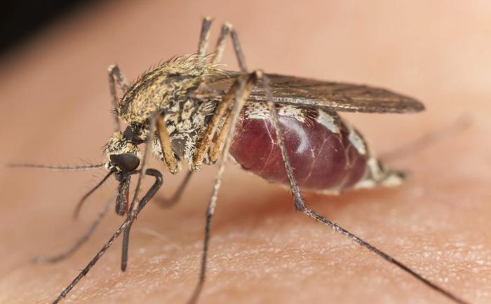 Интересные данные и факты про комаров