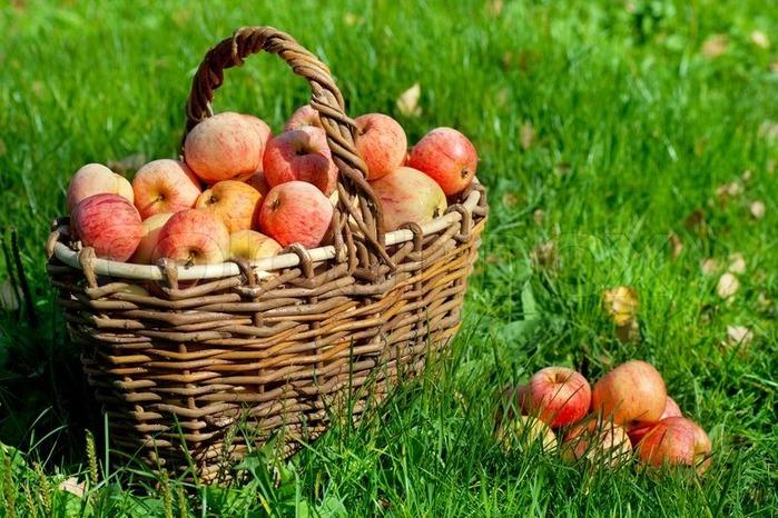 5117389-apples-in-a-basket (700x466, 141Kb)