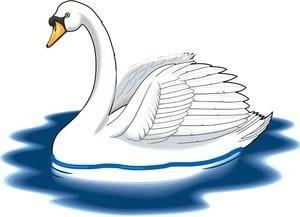 птицы лебеди 4 (300x217, 25Kb)