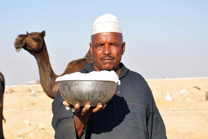Интересные данные и факты про верблюдов