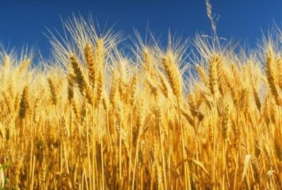 Российский аналитический центр по вопросам сельхозпроизводства презентован в Татарстане