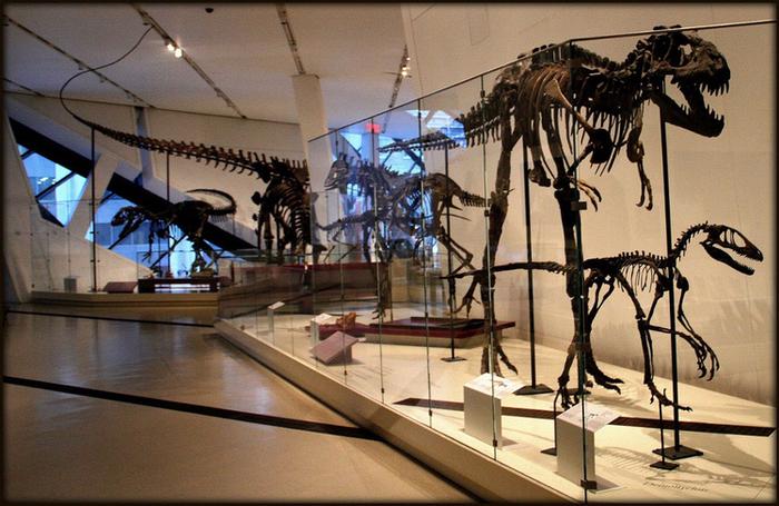 Королевский музей Онтарио  7 (700x455, 454Kb)