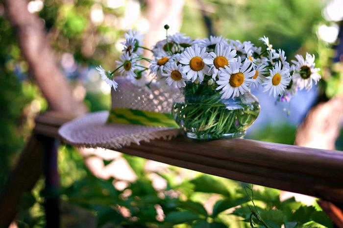 315872__daisies_p (700x465, 83Kb)