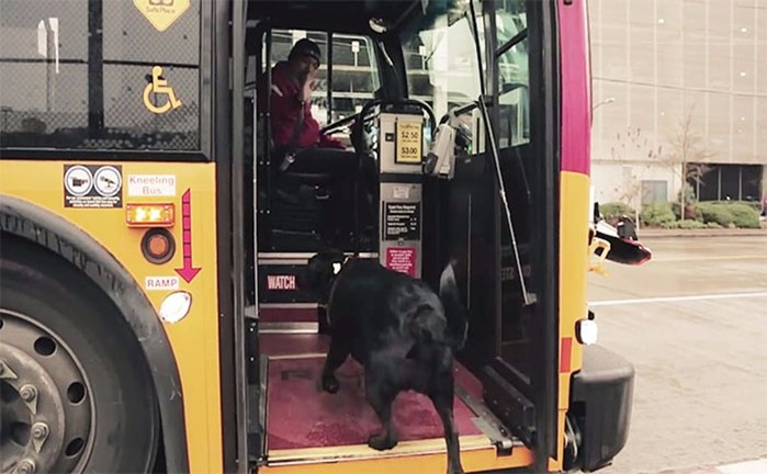 Собака-пассажир в Сиэтле