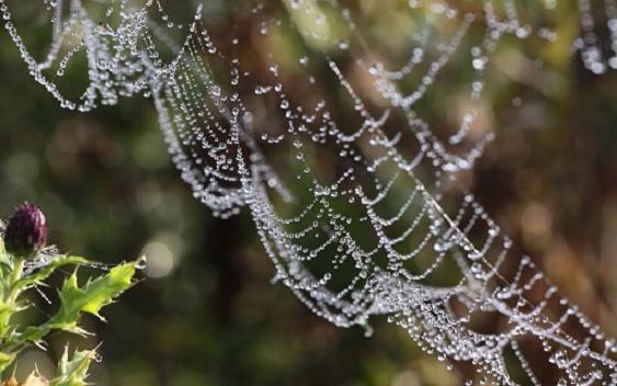 Nature___Seasons___Autumn___Webs_autumn_046463_ (563x352, 204Kb)