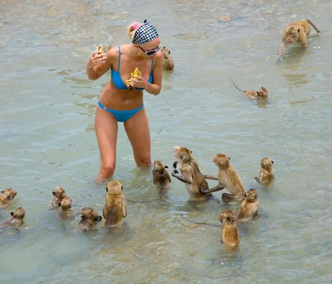 Блондинка и обезьяны (видео)