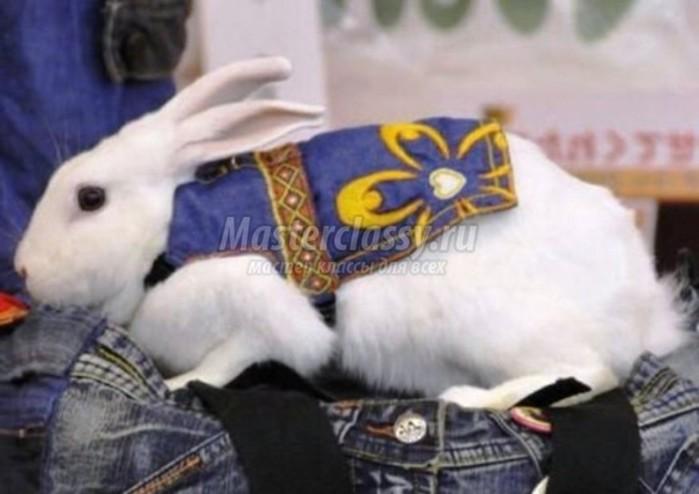 Одежда для декоративных кроликов своими руками