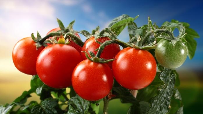 Двенадцать продуктов, которые можно есть без ограничения