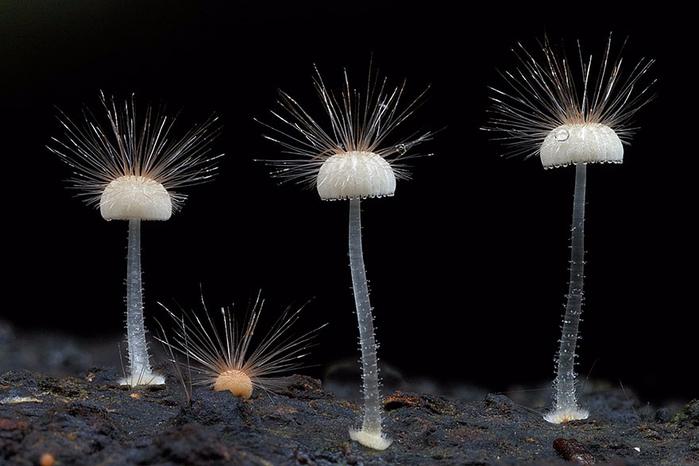 mushrooms-foto_26 (700x466, 229Kb)