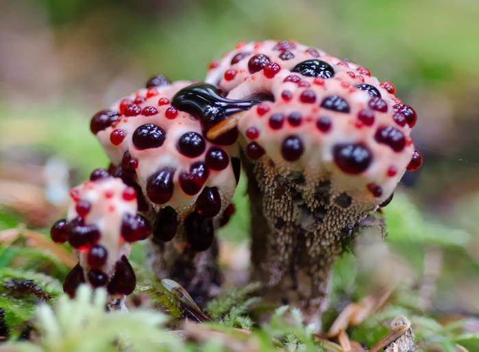 mushrooms-foto_14 (700x514, 355Kb)