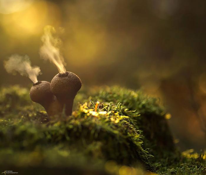 mushrooms-foto_1 (700x595, 296Kb)