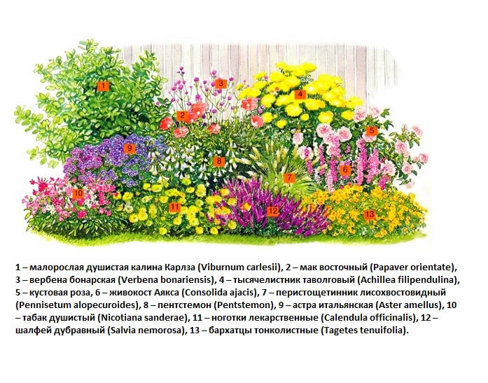 Цветник смешанный схемы и
