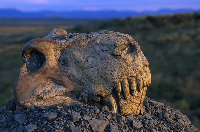 Вымирание динозавров стало причиной развития лягушек