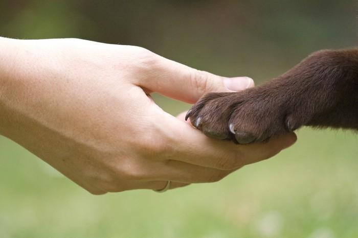 animal-rights-advocate-1024x682 (700x466, 47Kb)