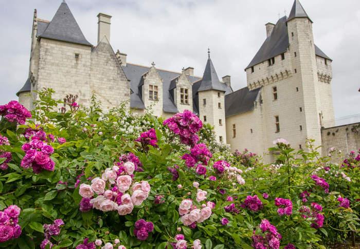 le-conservatoire-de-roses-parfumees-au-chateau-du-rivau (700x485, 81Kb)