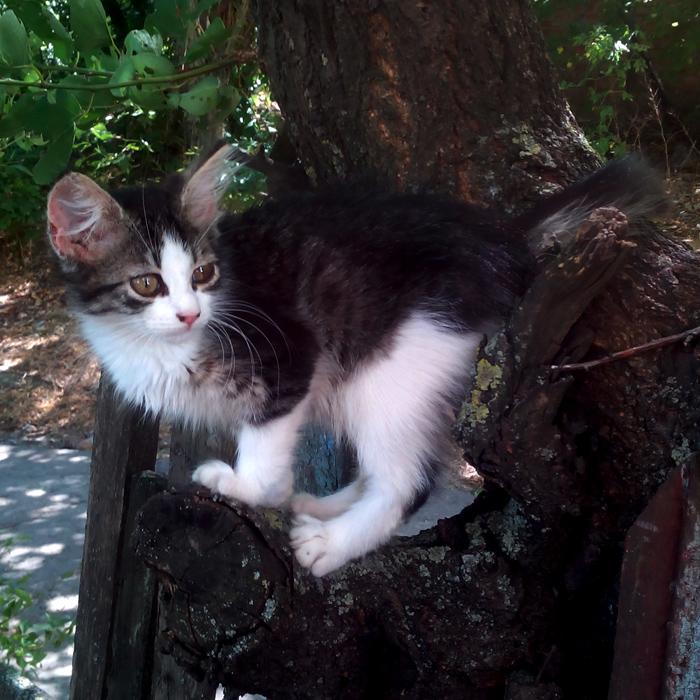 Котёночек/683232_mimimi700 (700x700, 269Kb)