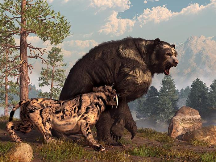 Кто сильнее   медведь или тигр?