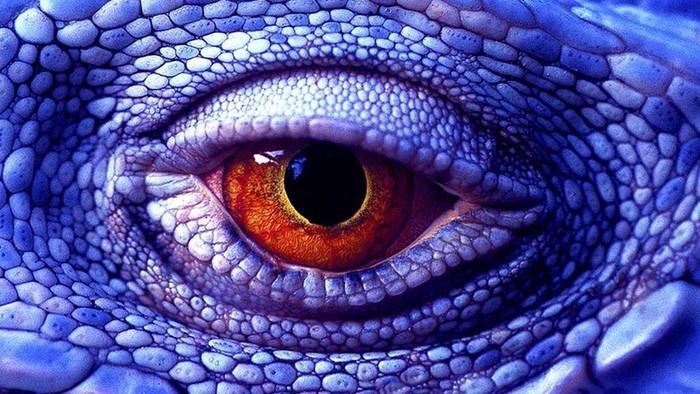 Различают ли животные цвета? Каким они видят наш мир