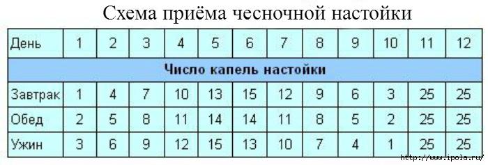 """alt=""""Чесночная настойка для чистоты сосудов и продления молодости""""/2835299_SHEMA_PRIYoMA_NASTOIKI (700x237, 120Kb)"""