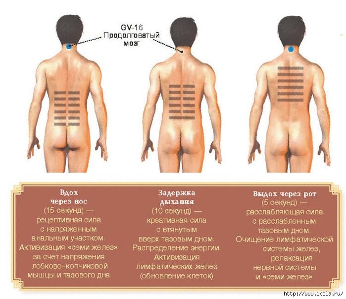 alt=Интимное упражнение цигун для женщин и для мужчин/2835299_Samoe_myjskoe_yprajnenie_cigyn (700x603, 227Kb)
