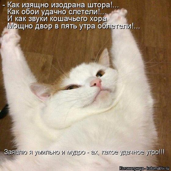 kotomatritsa_NS (560x559, 307Kb)