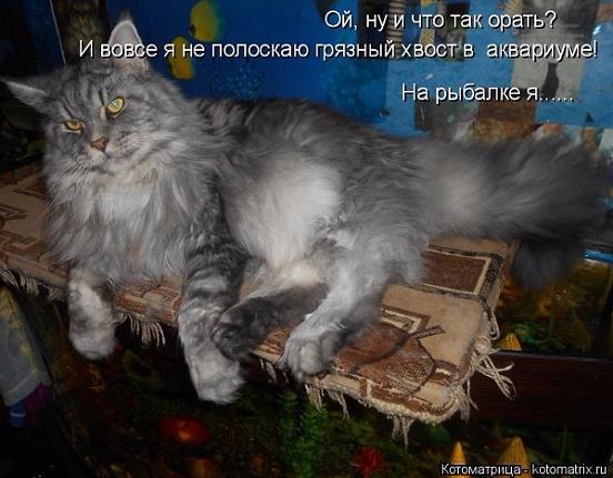 kotomatritsa_C (552x431, 232Kb)
