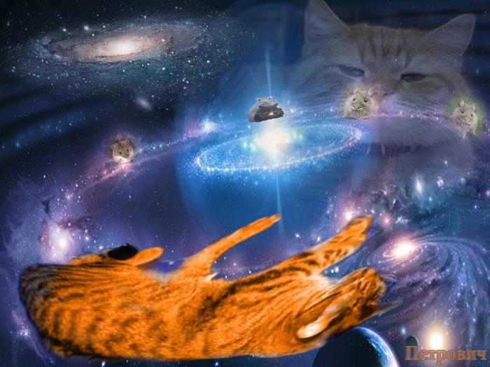 Котик (640x485, 156Kb)