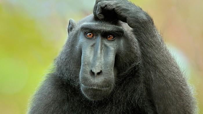 Все ли обезьяны одинаково смышлены? Интеллект животных