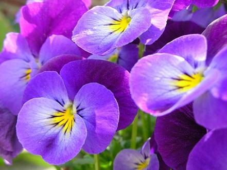 flowers004 - копия (441x332, 59Kb)