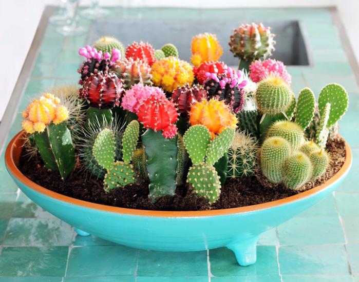 cactus (699x550, 451Kb)