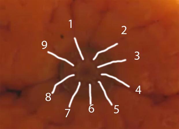 6 (620x448, 179Kb)
