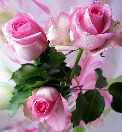 rosa 4 (400x431, 424Kb)