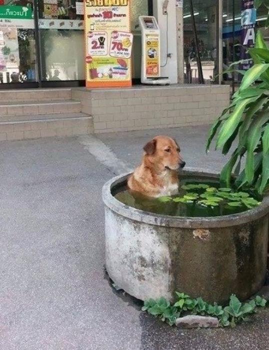 смешные фото собак 8 (538x700, 408Kb)