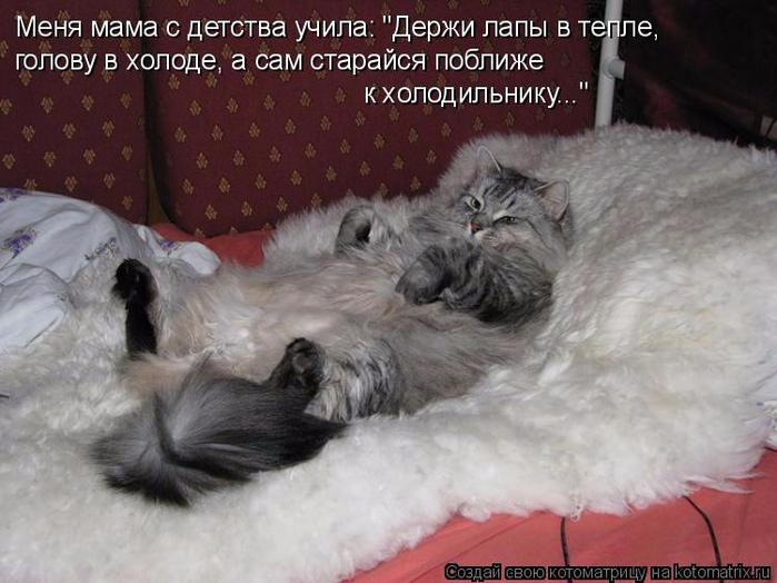 kotomatritsa_- (700x524, 324Kb)