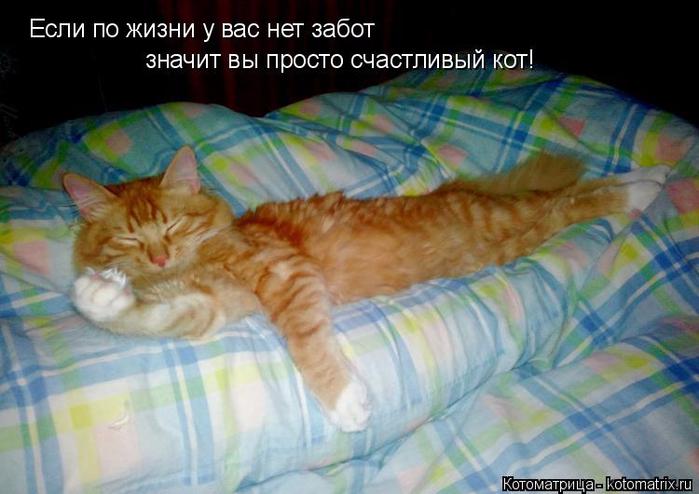 kotomatritsa_8 (700x494, 333Kb)