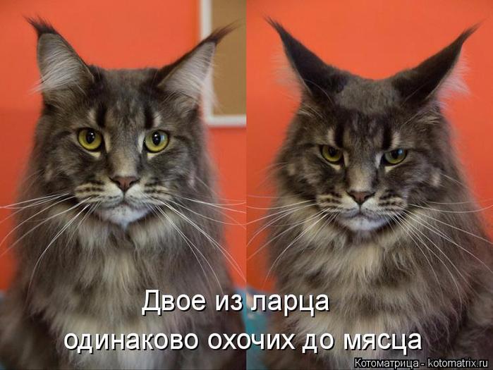 kotomatritsa_B (700x525, 327Kb)