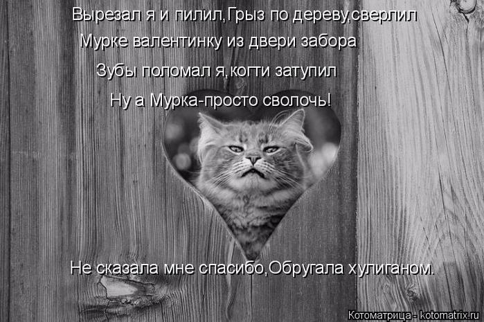 kotomatritsa_D (1) (700x465, 251Kb)